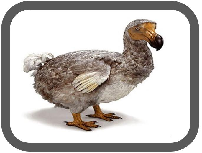 Agile Dodo