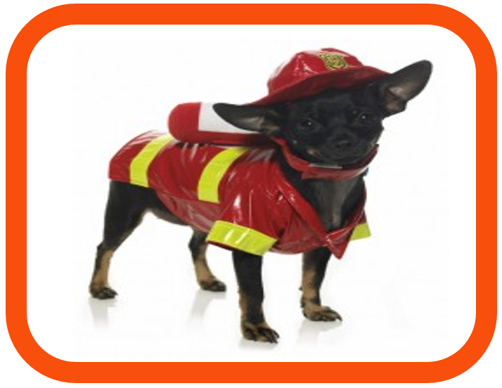 Agile firefighting dog